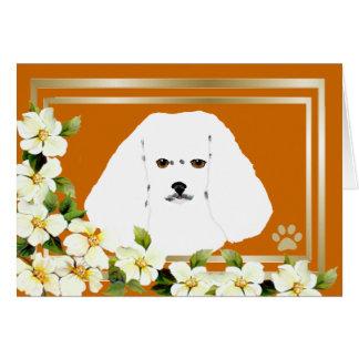 Carte Bichon Frise avec des fleurs de cornouiller