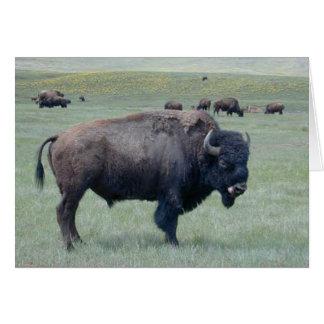Carte Bison