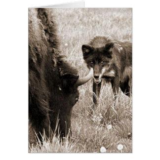 Carte Bison agressif de chasse de loup