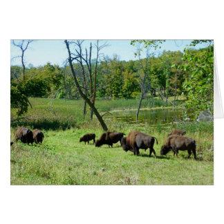 Carte Bison du Dakota du Nord