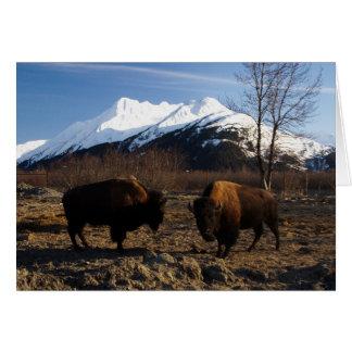 Carte Bison Tet-a-Tet