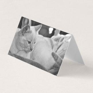 Carte Blanc blanc de chat