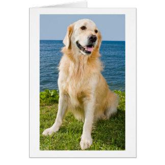 Carte Blanc de chiot de golden retriever
