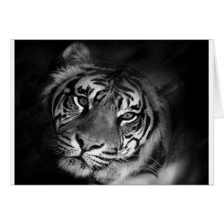 Carte blanc-tigre
