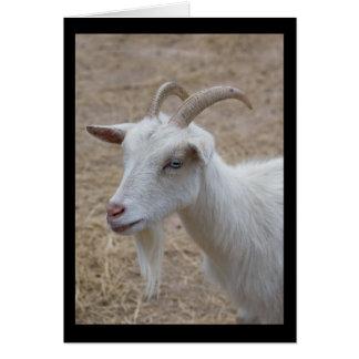 Carte blanche de chèvre de Billy