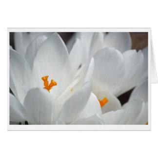 Carte blanche de fleur de crocus avec le message