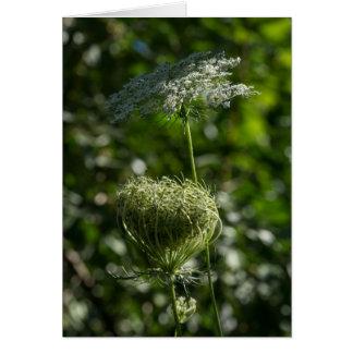Carte blanche de fleur sauvage de dentelle de la