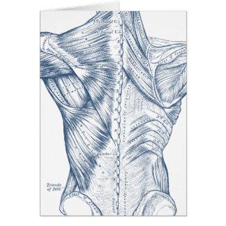 Carte Bleu médical vintage de muscles du dos de dessin
