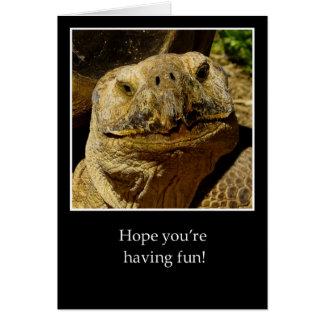 Carte Bonjour à la tortue de sourire de campeur