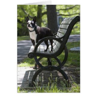 Carte Boston Terrier