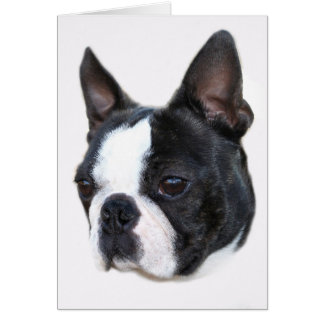 Carte Boston Terrier