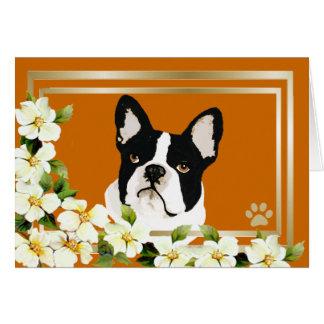 Carte Boston Terrier avec des fleurs de cornouiller