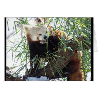Carte Bouche ouverte de panda rouge