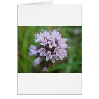 Carte Boule de floraison avec lilas des floraisons