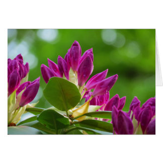 Carte Bourgeons de rhododendron