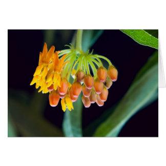 Carte Bourgeons et fleurs de Milkweed de papillon