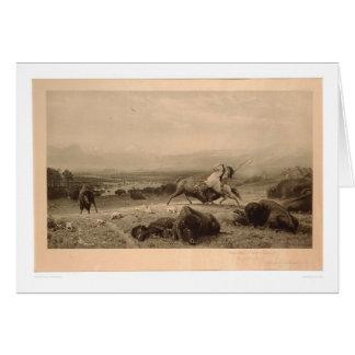 Carte Bout de Buffalo Bierstadt (0137A) - non restauré