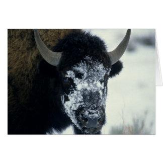 Carte Buffalo coverered par neige