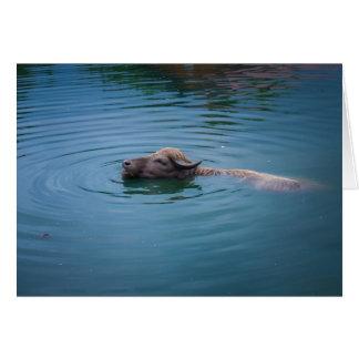 Carte Buffalo d'eau de natation