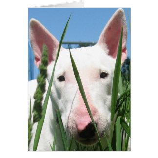 Carte Bull-terrier anglais mignon