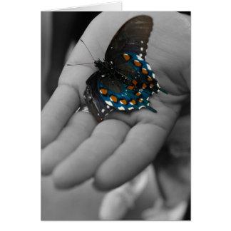 Carte Buttefly à disposition