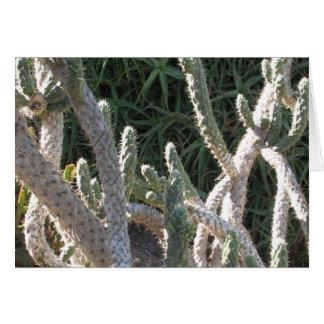 Carte Cactus