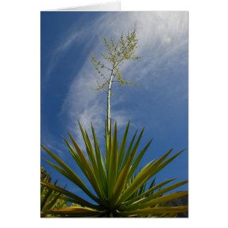 Carte Cactus de Kauai