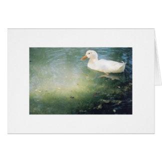 Carte canard sur l'étang