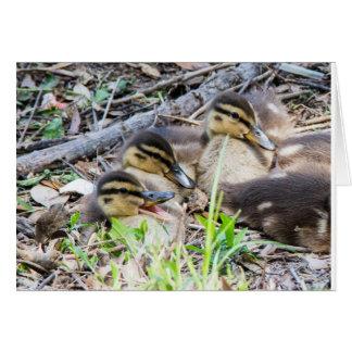 Carte Canards de bébé