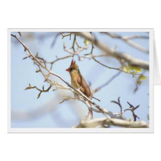 Carte Cardinal au printemps