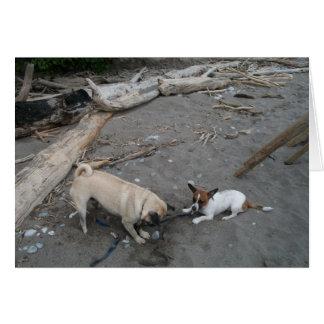 Carte Carlin et chiwawa jouant sur la plage