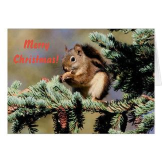 Carte Carte/écureuil rouge/Noël