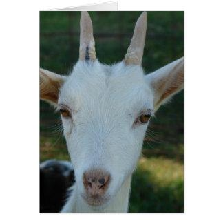 Carte Casper la chèvre