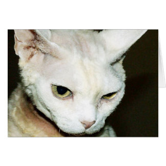 CARTE CAT ?