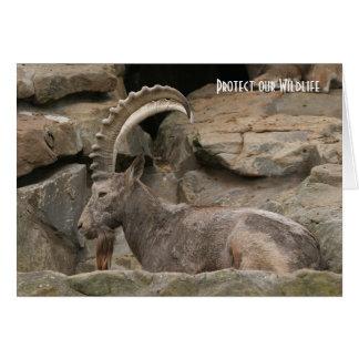 Carte Caucasien Tur au zoo de Berlin