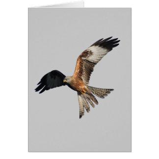 Carte Cerf-volant rouge - milvus de Milvus