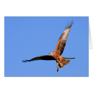 Carte Cerfs-volants rouges sauvages