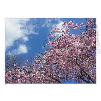 Carte Cerise pleurante au printemps