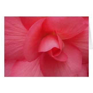 Carte Chaîne rose lumineuse de cadeau de bégonia
