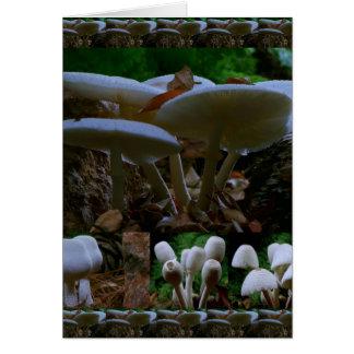 Carte CHAMPIGNON : Les fleurs sauvages de champignons