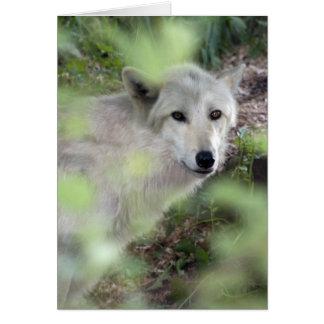 Carte Charme de loup