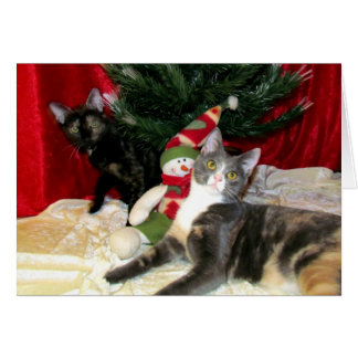 Carte Chat, chaton, Noël, délivrance, photo