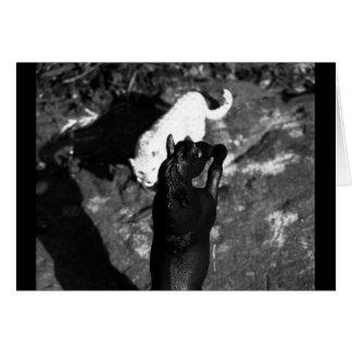 Carte Chat contre l'étalon noir