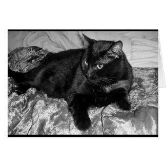 Carte Chat noir sérieux