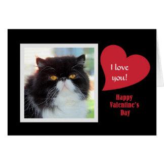 Carte Chat persan je t'aime Valentine