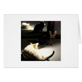 Carte chatons dans le miroir