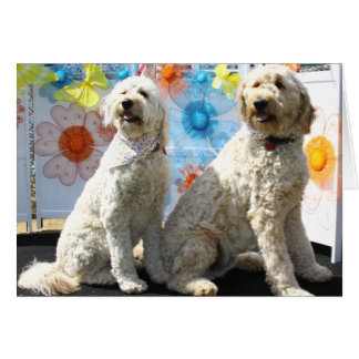Carte Chester et Lilly - GoldenDoodle -7