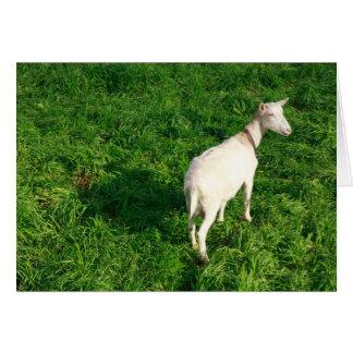 Carte Chèvre blanche