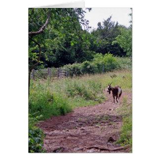Carte Chèvre dans le caractère d'ambiguité