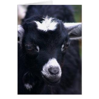 Carte Chèvre de bébé